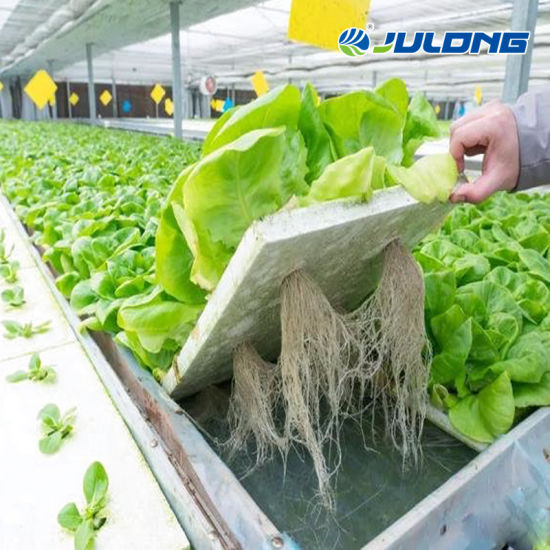 Venlo Multi-Span Commercial Glass Lettuce Nft Hydroponic Greenhouse for Sale