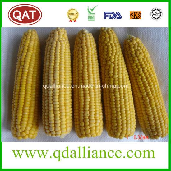 Top Quality Frozen Whole Sweet Corn COB