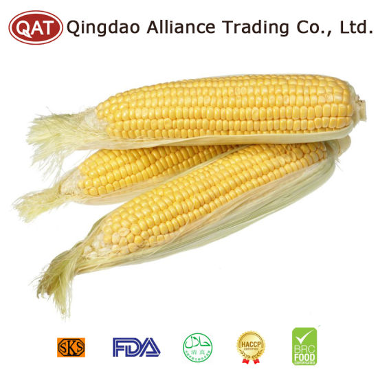 New Crop Frozen Sweet Corn COB pictures & photos
