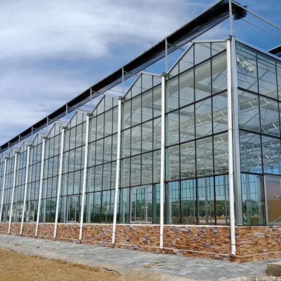 Multi Span Glass Greenhouse with Hydroponics for Tomato Growing