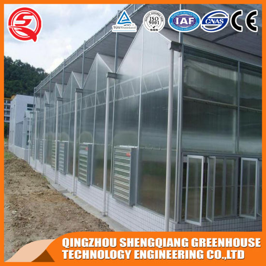 Polycarbonate Greenhouse for Vegetables with Complete System/Hydroponic Systems Price