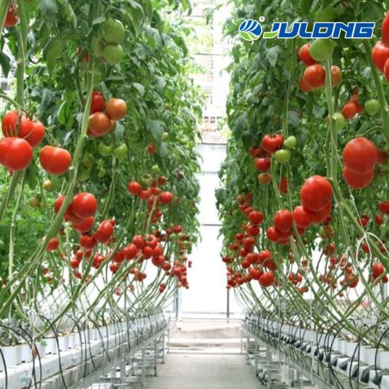 Good Quality Hydroponics Growing System Greenhouse Vegetables Tomatoes Garden House