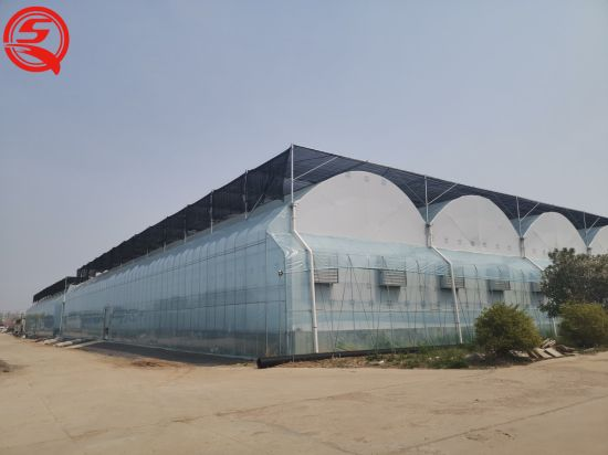 Multi-Span Film Greenhouse Soilless Cultivation of Cumumber