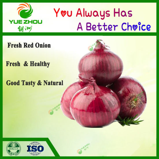 Fresh Vegetable Wholesale Red Onion Price From China pictures & photos
