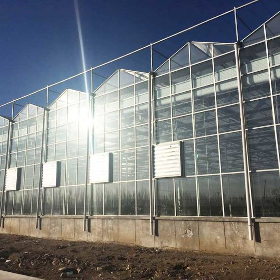 Agriculture Commercial Multi-Span Glass Greenhouse