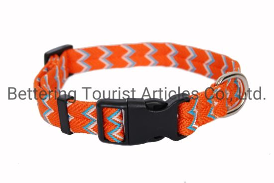 Orange Colorful Hunting Dog Collar