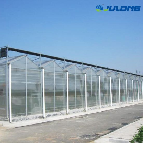 Turnkey Horticultural Venlo Polycarbonate Greenhouse with Hydroponics System Growing Tomato Manufacture