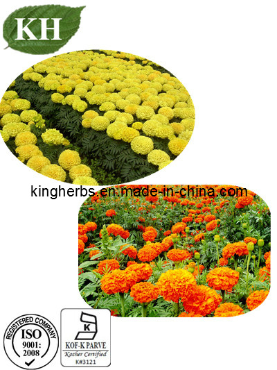 Marigold Extract Lutein 20%, 80% CAS: 127-40-2 pictures & photos