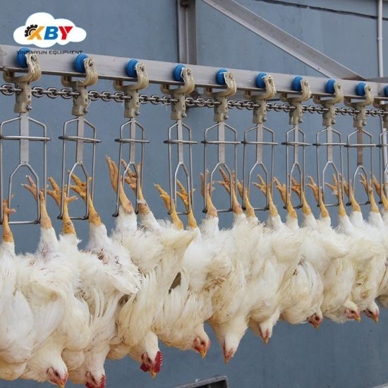 Automatic Chicken Slaughter Equipment for Slaughterhouse
