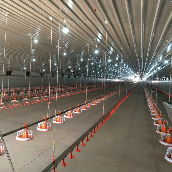 Automatic Complete Poultry Farm Equipment Raise on The Ground