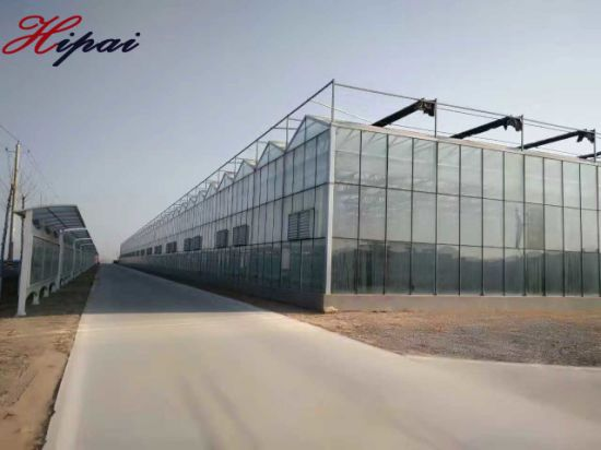 Venlo Large Glass Greenhouse for Vegetable Growing