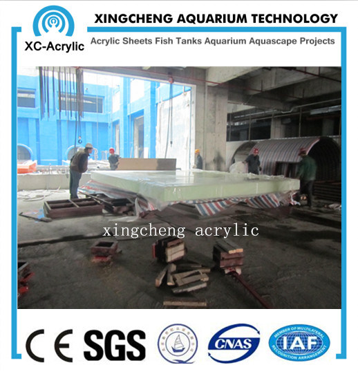 Customized Clear Acrylic Material Acrylic Sea World Project Price pictures & photos