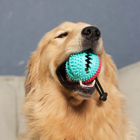 Food Grade Dog Chewing Toy Toothbrush Ball