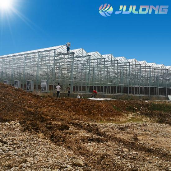 Tomato Planting Multi-Span Tunnel Green House
