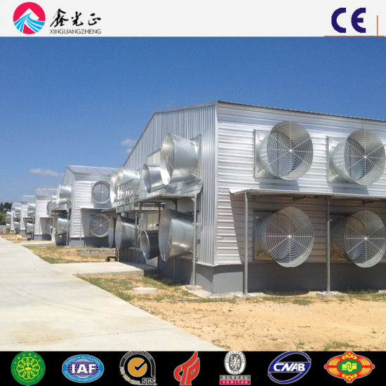China Low Cost Poultry Farm Shed for Layers - China Layer Shed