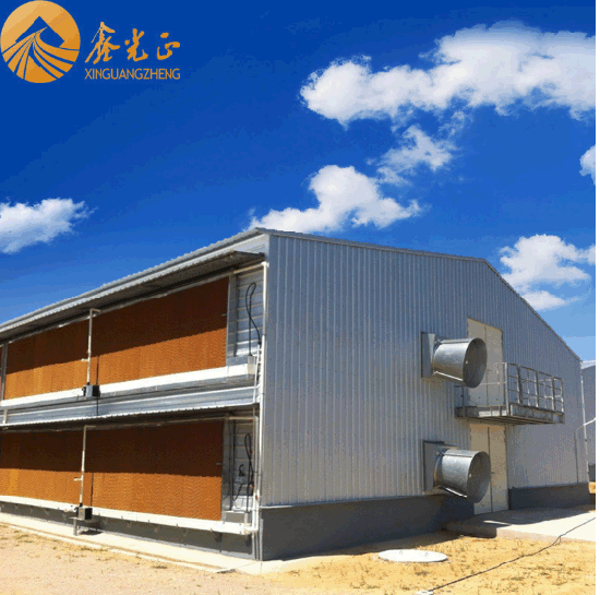 China Low Cost Automatic Quail Cage 6 Layer Egg Quail Cage/Poultry