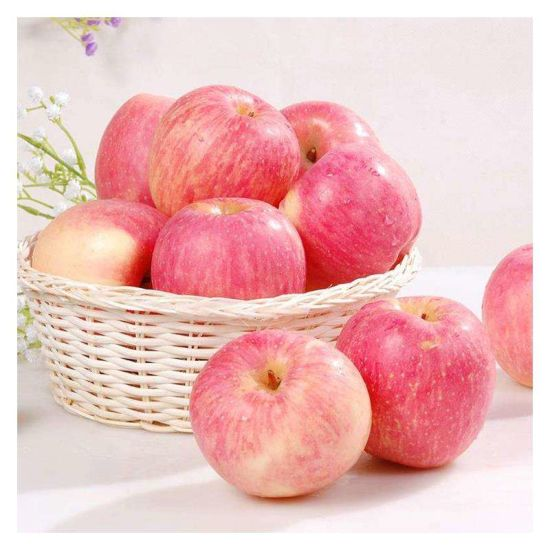 Best Quality FUJI Apple with Competitive Price