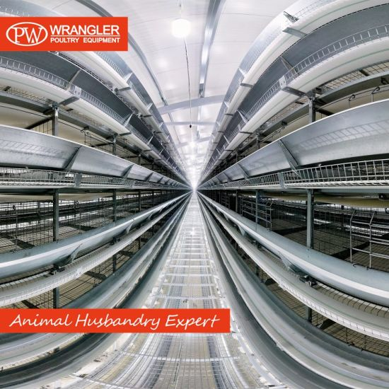 Good Price Poultry Farm Equipment Popular Layer Chicken Battery Cage