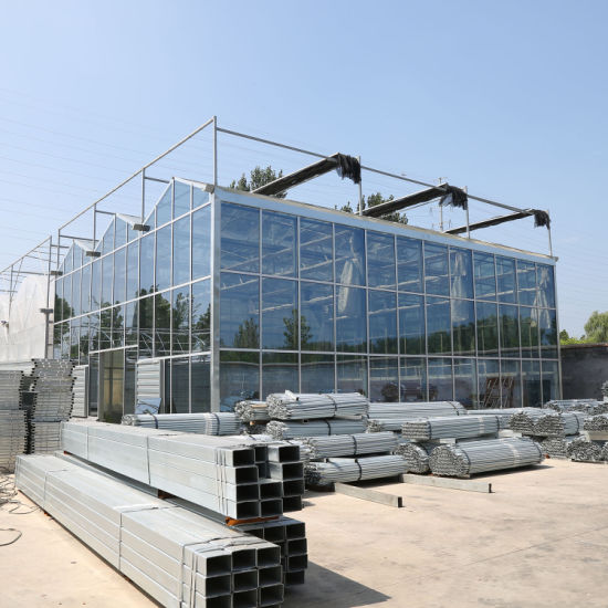 Multi-Span Glass Agricultural Greenhouse with Hydroponic Growth System