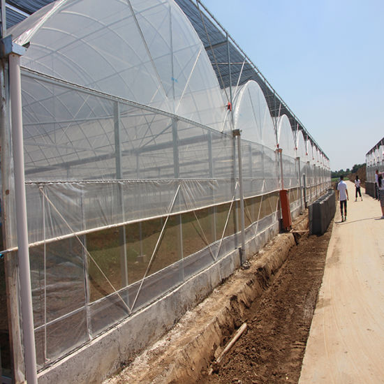 Plastic Film Multi-Span Hydroponic Green House for Vegetable