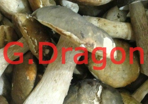 Low Profit High Quality Frozen Shiitake Mushroom (GD-IQF006)