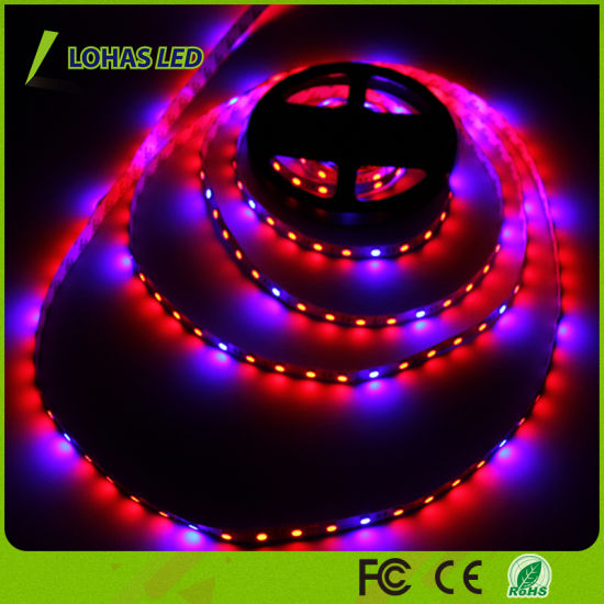 12V 60 LEDs/Meter 5m/Roll LED Strip Light Red and Blue Color LED Grow Light Strip pictures & photos
