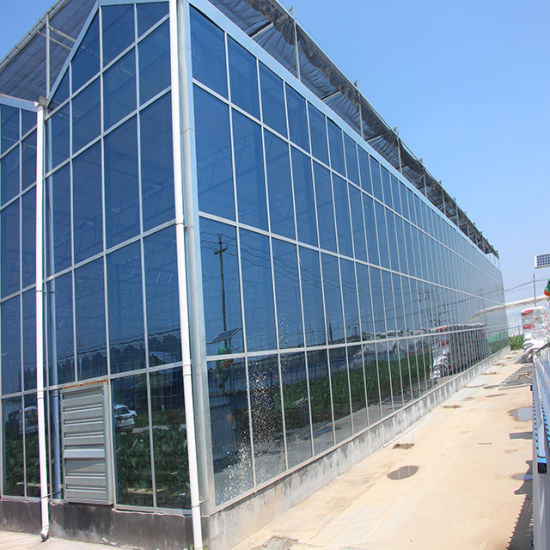 Glass Agriculture Greenhouse for Tomatoes/Flowers