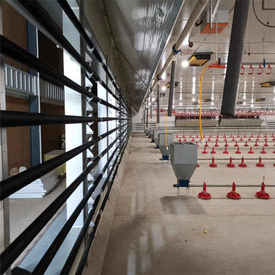 Automatic Poultry Feeding Line Equipment Chicken Feed System