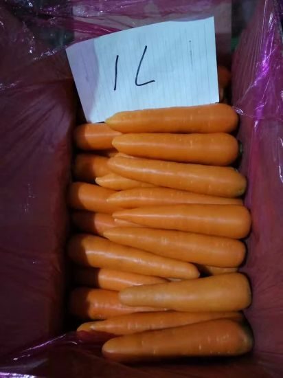 2017 Excellent & Fresh Carrot pictures & photos