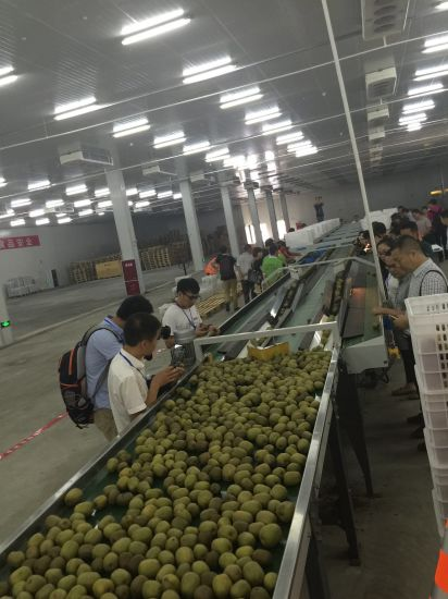 Million Tons of Kiwi Gas Storage/ Ca Cold Room/10000ton Kiwifruit Storage & China Million Tons of Kiwi Gas Storage/ Ca Cold Room/10000ton ...