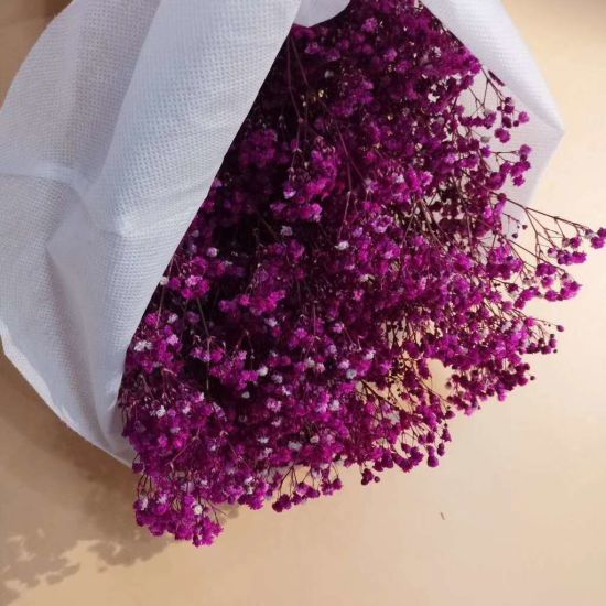 Preserved Real Flowers Gypsophila 3.5 Oz Floral Fillers Decoration pictures & photos