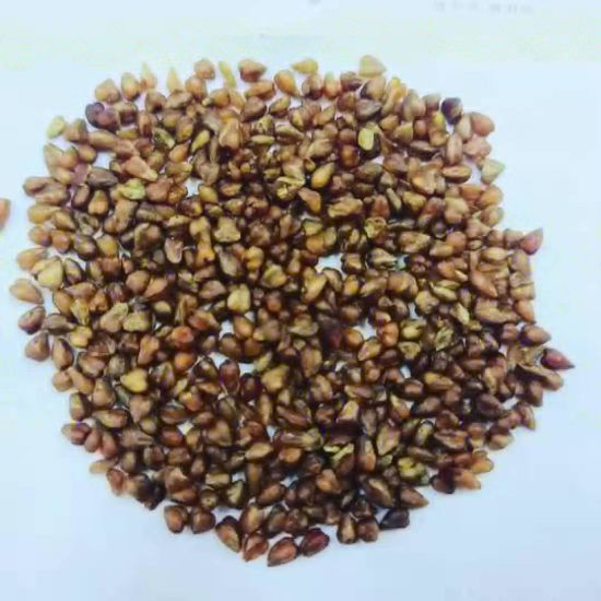 Wholesale Detox Tea Health Care Buckwheat Tea From Factory