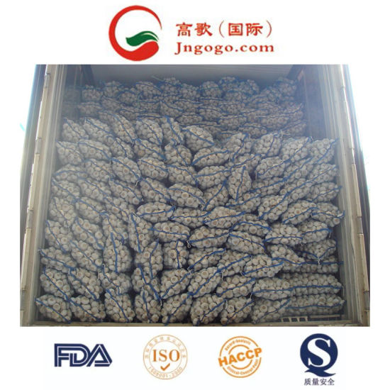Professional Exporting New Crop 5.0cm and up Normal White Garlic