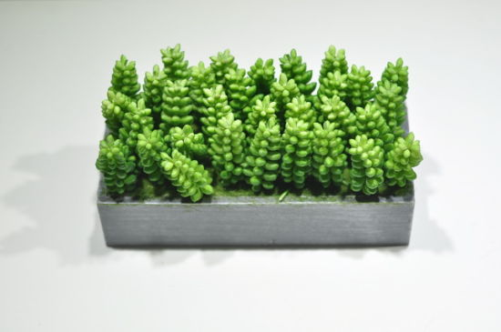 Artificial Plants and Flowers of Mini Plant Succulent Gu-SD0291 pictures & photos