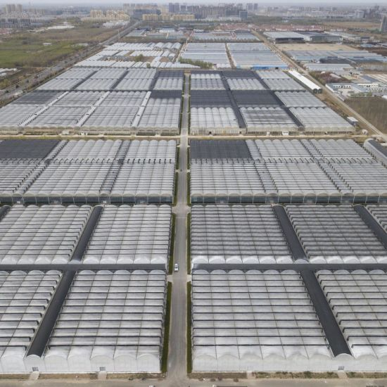 Hot Galvanized Steel Winter Film Greenhouse with Hydroponic System