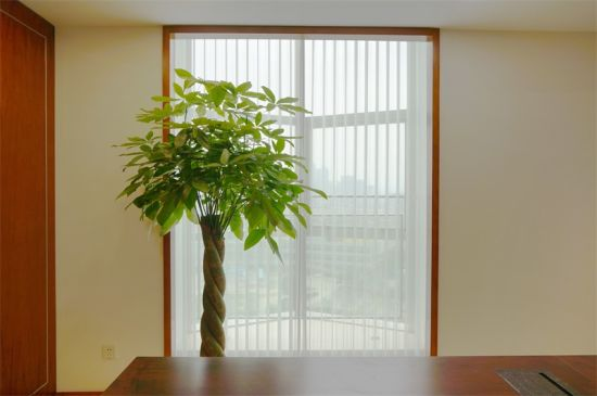 Office Window And Glasses Door Blinds Curtain