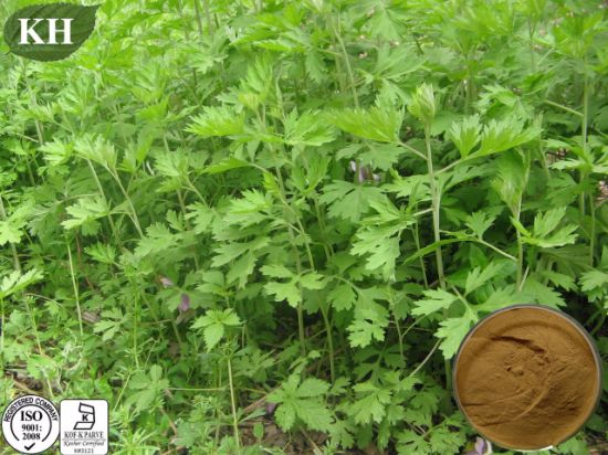 Chinese Natural Herbs Argyi Extract pictures & photos