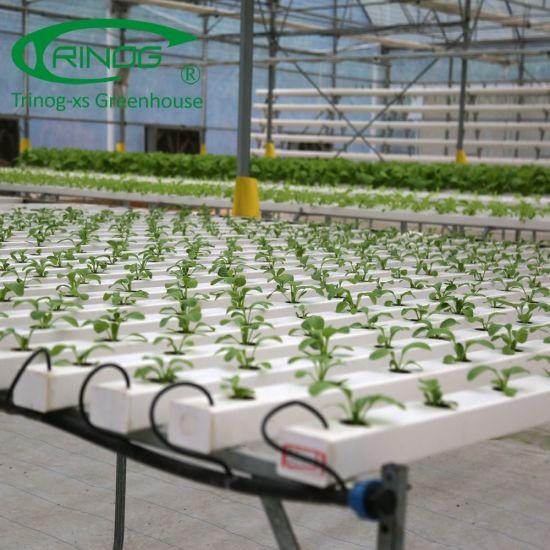 Fixed Vent Multi Span rose Flower Greenhouse for Kenya farm