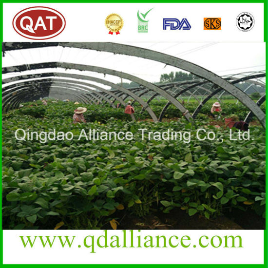 IQF Edamame Soybean with High Protein and Low Fat pictures & photos