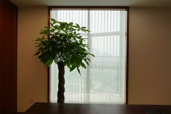 Office Window and Glasses Door Blinds Curtain pictures & photos