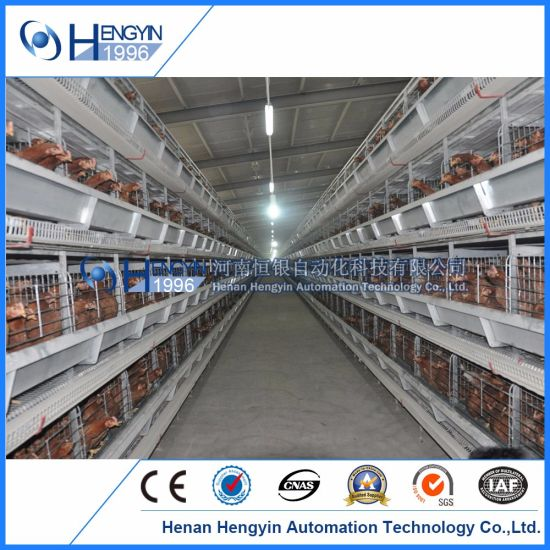 Poultry Farm Equipment H Type Layer Chicken Cage