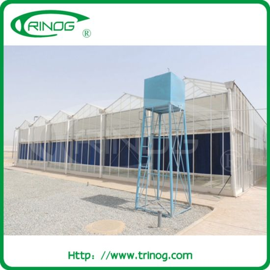 China Multi-span venlo tempered gl tunnel greenhouse for ... on
