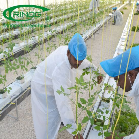 Commercial used tomato rockwool indoor farming hydroponics system equipment in greenhouse
