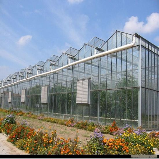 Agriculture Multi Span Glass Greenhouse for Planting