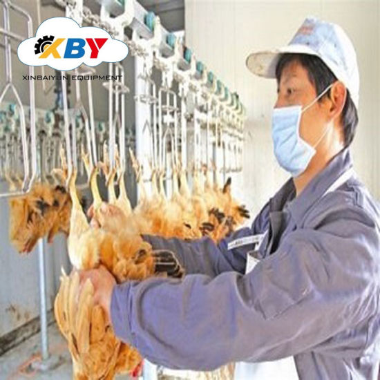 2019 New Poultry Slaughtering Equipment for Chicken Farm Abattoir Machine