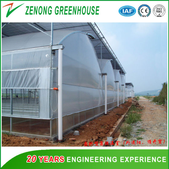 Multi-Span Plastic Film Greenhouse with Hydroponics System for Rose/Cherry Tomato/Chili / Sightseeing