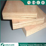 Good Quantity Bintangor or Okoume Commercial Concrete Plywood 1220X2440mm pictures & photos