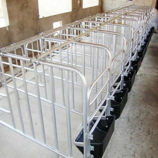 Sow Cultivation Equipment Sow Crate with Manger pictures & photos