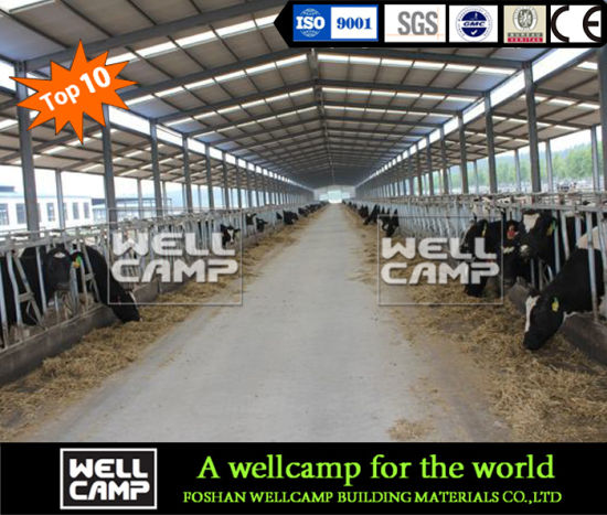 Wellcamp Low Price Steel Structure Farm Design Dairy Cows Cattle Barn Shed