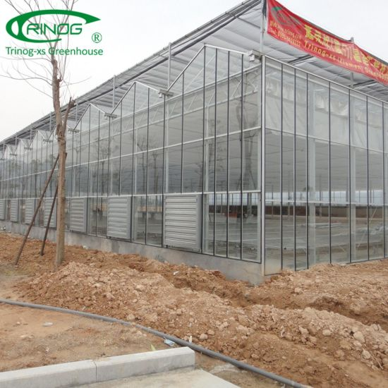 Holland Style Commercial Glass Greenhouse